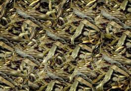 Gelben Tee Teesorte