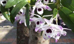 Orchideen bei Teesorte