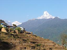 Nepal Shangri La bei Teesorte