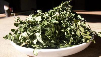 Teesorte Tee Moringa Tee