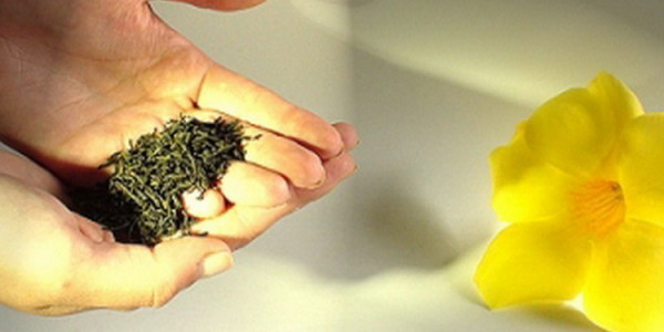 Tres Hierbar Tee - die Mischung der gesunden Drei!