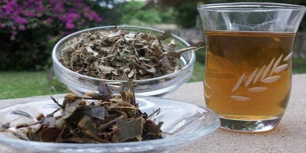 Katzenrallen Tee - ein indianisches Heilmittel?