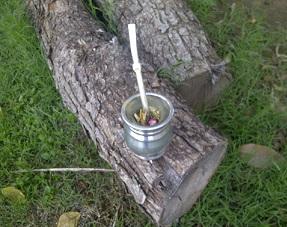 Mate Waldbeere bei Teesorte