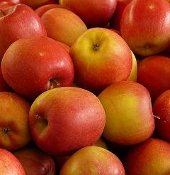 Schwarztee Kandierter Apfel bei Teesorte