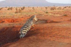Kenia Milima GFBOP würziger Schwarztee aus Afrika