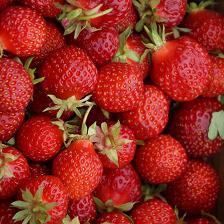 Oolong Erdbeerwinter bei Teesorte