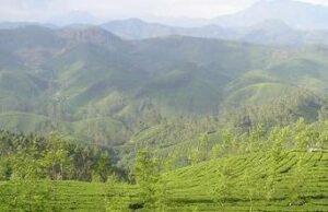 Assam Panitola bei Teesorte