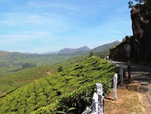 Assam Keyhung TGFOP1 SF bei Teesorte