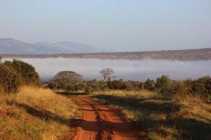Oolong Malawi Salima Teesorte