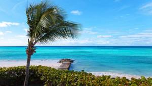 Grüntee Kuss der Karibik bei Teesorte