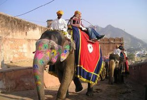 Ceylon Elephant Brand BOP bei Teesorte