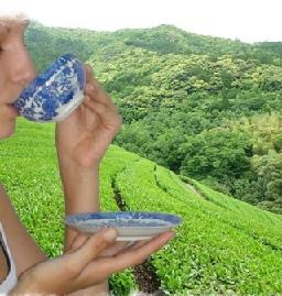Darjeeling Makaibari FTGFOP1 bei Teesorte