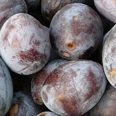 Früchtetee Nougat Pfläumchen bei Teesorte