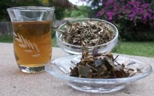 Katzenkralle Tee - stärkt, bei Teesorte