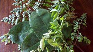 Kräutertee Tres Hierbas - Exklusiv bei Teesorte kaufen