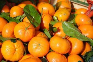 Grüntee winterliche Mandarine im Teelexikon