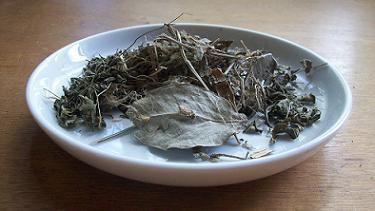 Cerebro Mente bei Teesorte