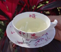 Chanca Piedra Tea bei Teesorte
