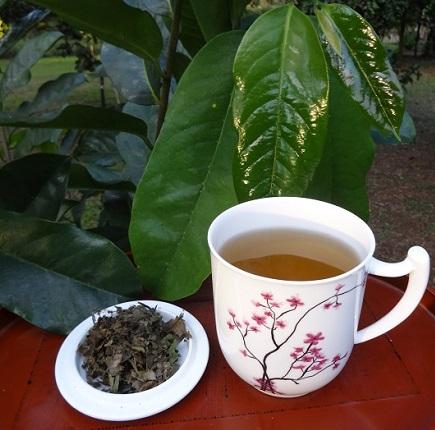 graviola tee zubereitung aussehen geschmack bei teesorte. Black Bedroom Furniture Sets. Home Design Ideas