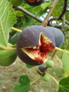 Feigen im Früchtetee Feigen Trifle