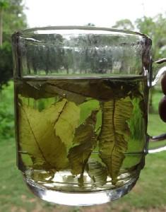 Teesorte Cedron Citron Aloysia citrodora