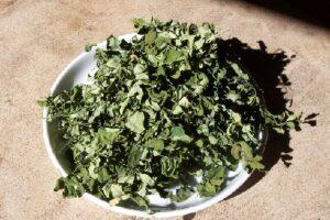 Moringa Tee Bio Tee bei Teesorte