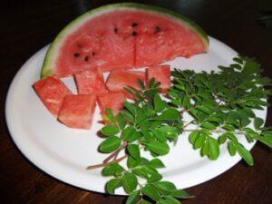 Leckere Moringa Melonen Grüntee Bowle bei Teesorte