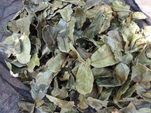 Sauersack Tee bei Amazon kaufen