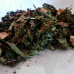 Respaldar Tee bei Teesorte