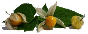 Früchtetee Birnen Mango Physalis bei Teesorte