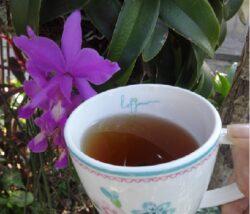 Kräutertee Disminuir Té bei Teesorte