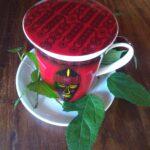 maulbeerblätter_teesorte